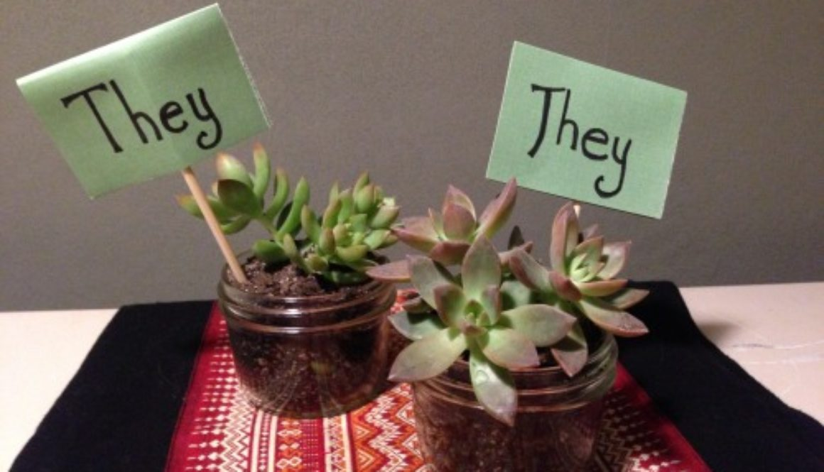 they them succulents